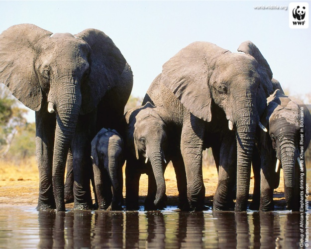 48378_elephantgroup_1280x1024