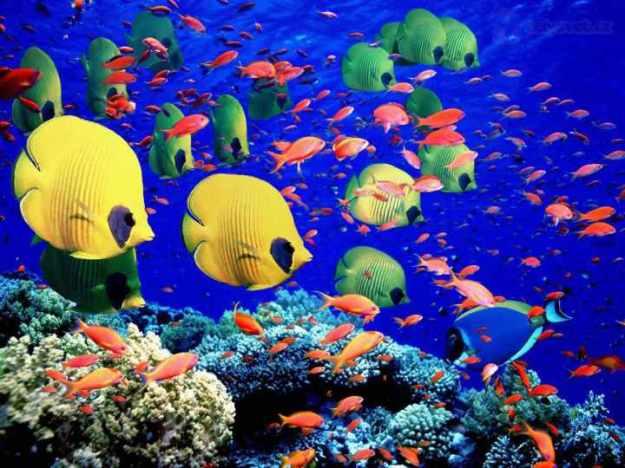 The-Great-Barrier-Reef-Australia