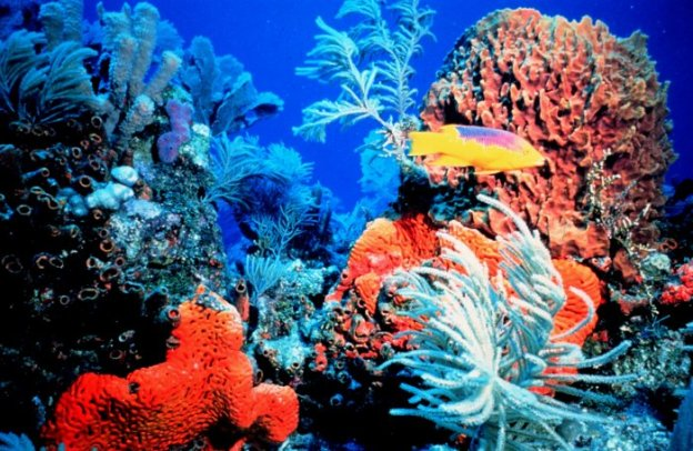 coral-reef-credit-florida-keys-national-marine-sanctuary
