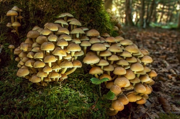 champignon47