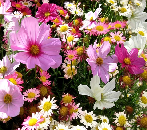 Flowers-wallpaper-10724486